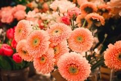 Květiny za oponou