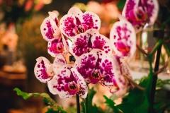 Květiny okouzlí vaše hosty